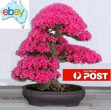 20PCS JAPANESE SAKURA CHERRY BLOSSOM BONSAI / TREE SEEDS
