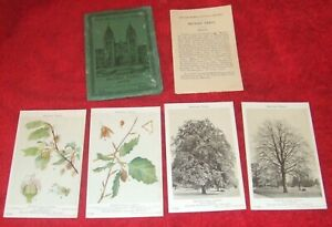 British Museum Natural History Section P/Card Set F25 1928 - British Beech Trees