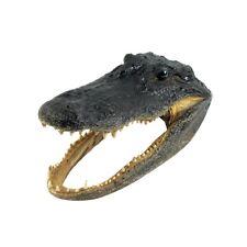 "11"" Real Alligator Taxidermy Gator Head Authentic Genuine Animal Reptile Skull"
