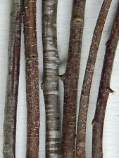 """30 Cherry Tree Branch Stick Twig Craft Supply Woodworking Wood 1/4~3/8""""D 6~16""""L"""