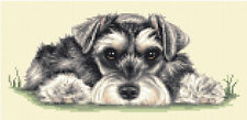 Miniature Schnauzer Dog Puppy - Full Counted Cross Stitch Kit