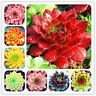 Succulents Bonsai Sempervivum Seeds Plants Potted For Mix Rare Fresh 100pcs