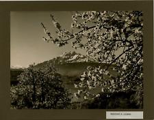 Schneider, Suisse, printemps à Lucerne vintage print, Switzerland Tirage argen