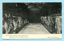 1906 Middletown De Cows in Stalls at Middletown Farms * Delaware