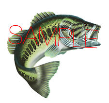 Large Mouth Bass 3 Fish Decal Custom Sticker Facing Right Largemouth