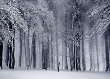 10x8ft Nature Scenic Winter Snow Misty Forest Photo Background Vinyl Backdrop LB