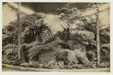 More details for glasgow botanic gardens 1896 photo by frith