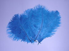 10 DRABS AQUA OSTRICH FEATHER HURL 125-150MM  FIRST GRADE FLY FISHING