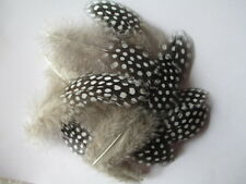 20 pcs beautiful Natural guinea fowl feathers 6-10 cm /2.5-4 inch DIY decoration