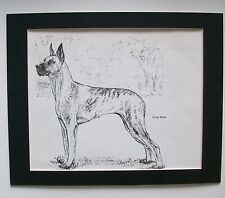 Great Dane Dog Print Gladys Emerson Cook Bookplate 1962 8x10 Matted Adorable