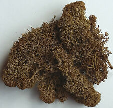 Foliage Lichen Moss for Model Trees Bushes Hedges Brown 50g bag