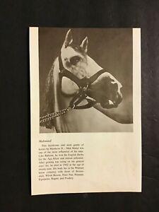 MAHMOUD II photo Horse Racing CHAMPION SIRE