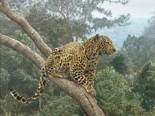 """""""The Solitary Hunter"""" Simon Combes Anniversary Edition Canvas"""