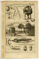 Antique Print-CAMERA OBSCURA-HERALDRY-CAMEL-CALIPER-CALVARY CROSS-Buys-1770