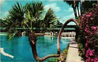 Vintage Postcard - Horse-Shoe Palm at Silver Springs Florida FL #1578