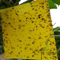 10/5pcs Flies Traps Bugs Sticky Board Aphid Insects Pest Killer Outdoor Trap BI
