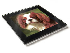 CAVALIER KING CHARLES SPANIEL Dog Premium Glass Table Coaster with Gift Box