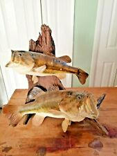 Vintage 70's Dual Large Mouth Real Skin Bass Standing or wall Mount, 2 Fish