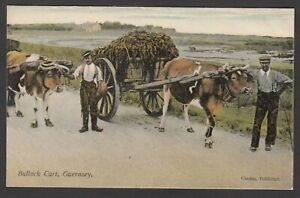 Postcard Guernsey Channel Islands early view Bullock Cart by Guerin