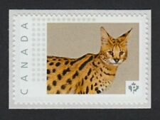 lq. cp. Savannah Cat = Picture Postage stamp Mnh Canada 2015 [p15/11pc3/1]