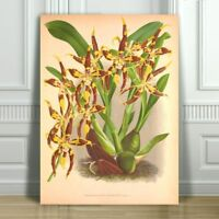 JEAN LINDEN - Beautiful Yellow & Brown Orchid #53 - CANVAS PRINT POSTER - 16x12""