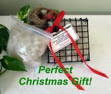 Bird/Hummingbird Alpaca Nesting Material Basket+Refill~Great Christmas Gift!
