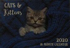 2020 Paperback Wall Calendar - Cats & Kittens