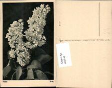 451140,Popp Verlag Flieder Blumen