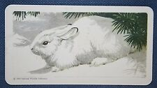 SNOWSHOE HARE   Vintage Illustrated Card   VGC
