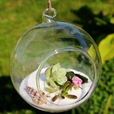 Ball Globe Shape Clear Hanging Glass Vase Flower Plants Terrarium Vase Container