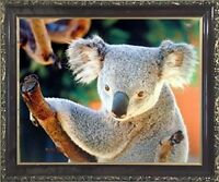 Koala Bear Holding a Tree Kids Room Wall Decor Mahogany Art Framed Picture 20x24