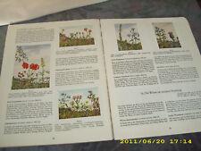 Sammelbilderalbum Blumen am WEGE HERBA  60 Jahre komple