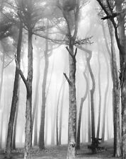 "Don Worth Photo, ""Trees and Fog, San Francisco"" 1980, gelatin silver"