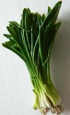 Spring Onion Bundle Scallion Vegetable Polyresin Fridge Magnet Souvenir