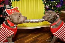 Dinner for Dogs - Buy A Dog a Christmas Dinner - Bully For You - A dogs dinner