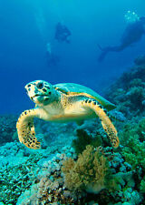 Hawksbill TURTLE -3D and Motion Lenticular Postcard Greeting Card - Marine Life