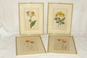 4 alte Bilder William Curtis 1799 Pflanzen Flora Rahmen Druck Stich Lithographie