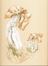 Botanical artwork Helvella Saddle fungus original welsh wildlife painting
