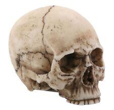 Small Human Skull Halloween Miniature Figurine 1.75 in