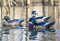 Dakota Decoy X'Treme Floating Wood Duck Decoys 6 Pack w/ 3 Drakes and 3 Hens