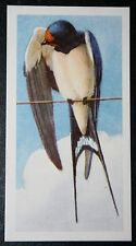 Swallow  Barn Swallow    Vintage Illustrated Card  VGC