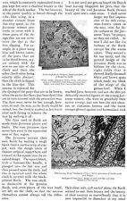 Javanese Batik Designs Jokarta Head Kerchief Sarong Surakarta 1918 Article