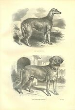 Rare 1867 Antique Dog Print ~ Rural Sports ~ Deerhound & Old English Mastiff