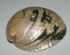 """Antique Service Bell Ocean shell Fun Piece! Approx 5 1/2"""" by 4 3/8"""""""