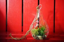 New listing Air Plant - Tear Drop Terrarium Kit with Moss and Pebbles Holiday Decor Gift