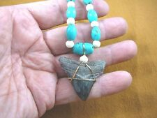 "s228-27) 1-5/8"" fossil Megalodon shark Tooth aceh bovine bone turquoise Necklace"