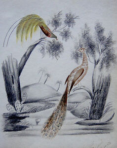 Victorian drawings, Africa, Pyramids and birds(2)