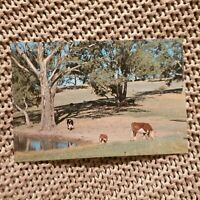 Greetings From Warren, NSW -  Vintage Postcard