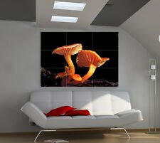 Mushrooms large giant 3d poster print photo mural wall art ia104