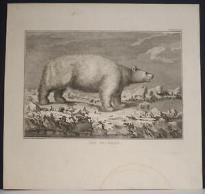 POLAR BEAR ARCTIC LANDS NORTH POLE 1803 JAMES COOK ANTIQUE COPPER ENGRAVED PLATE